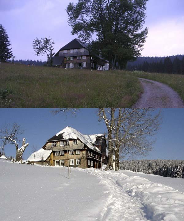 Haus Waldhäusle: Die Hütte